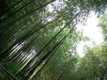 2009年6月京都 041.JPG